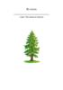 El abeto - application/pdf